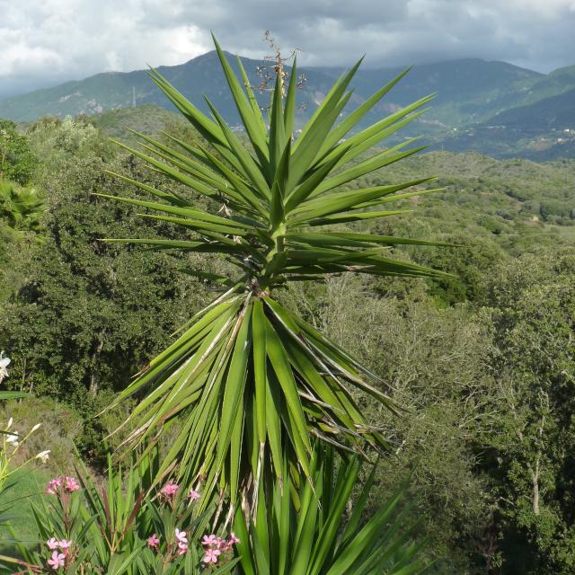 Paysage à découvrir autour de la location de villa dans le golfe de Liscia, flore du maquis corse